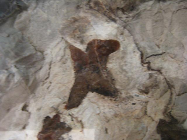katoushi (15).jpg
