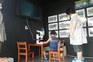 顕微鏡で観察