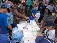 採れた魚や昆虫の分類と解説