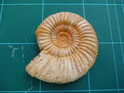 化石かレプリカか?1