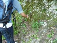 岩石を砕いて放散虫を探す