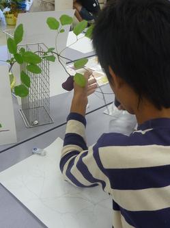 植物画03