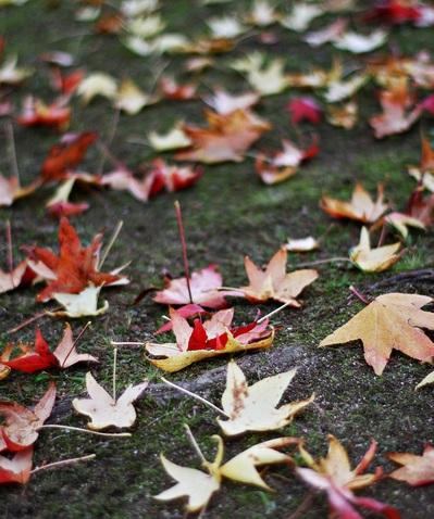 落ち葉のじゅうたんには・・・・・ちょっと物足りないかな