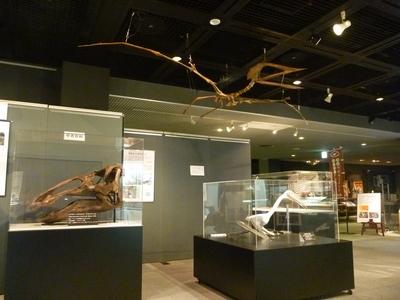 展示室の翼竜