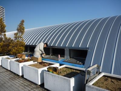 屋上の補修