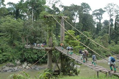 ボルネオジャングル