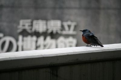 IMG_08971.jpgのサムネール画像のサムネール画像