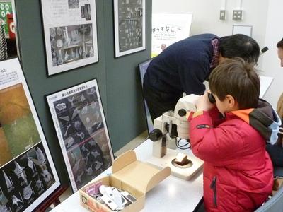 顕微鏡で見る化石