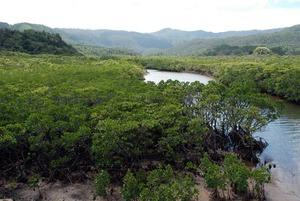 3 mangrove keshiki.jpg