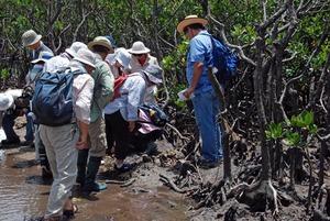 4 mangrove kansatsu.jpg