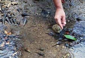 6 mangrove uminina.jpg