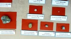 新種の貝類化石