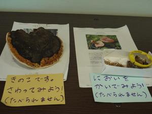 20100828kinoko.JPG