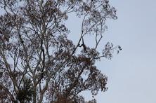 gibbon2.jpg
