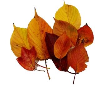 秋色の葉っぱ
