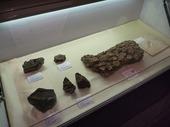 化石大集合04
