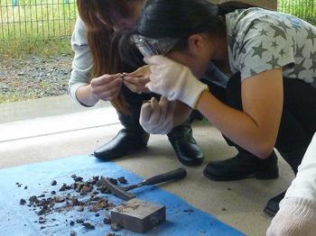 化石発掘体験04