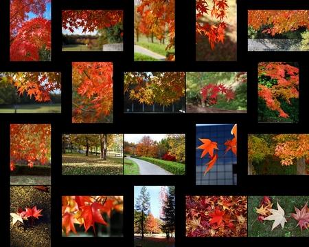 どこをみても秋色