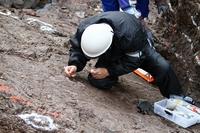 薬品で化石を保護処理