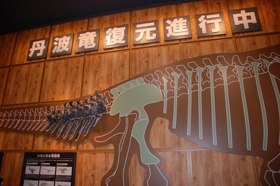 産出化石の展示