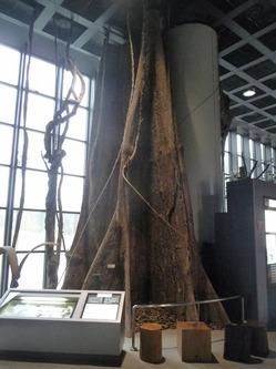 1階展示室〜のサムネール画像