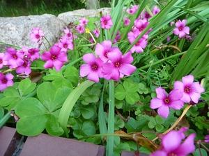 花壇の様子