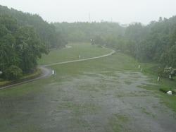 雨の深田公園