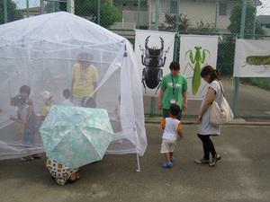 生きた昆虫を放した蚊帳