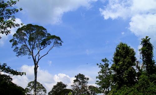 Borneo Blue Sky