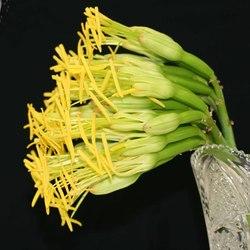 agave_male.JPG
