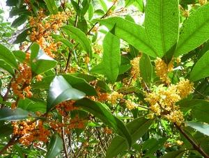 花の色と葉っぱの形と匂いが違う