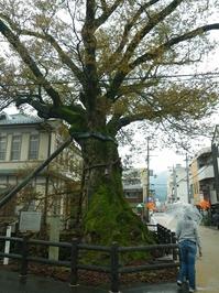 有名な木の根橋