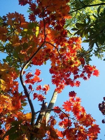 色づき始めた葉っぱたち