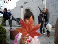 大きい葉っぱ