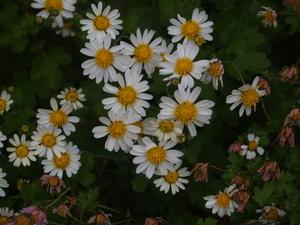 flower033.jpg