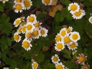 flower035.jpg