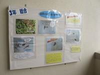 toujyouhigashi20120306_2.jpg