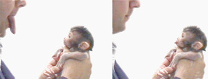 1280px-Makak_neonatal_imitation.jpgのサムネール画像のサムネール画像