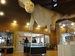 恐竜化石実物展示