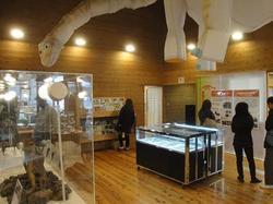 恐竜化石実物展示2