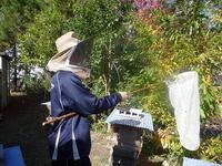 スズメバチの捕獲に挑戦