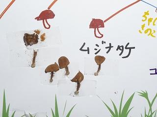 ムジナタケ.jpg