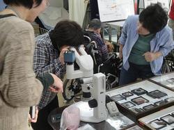 顕微鏡を覗き込むと・・・