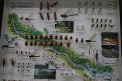 深田公園「自然の流れ」の生きもののサムネール画像のサムネール画像のサムネール画像