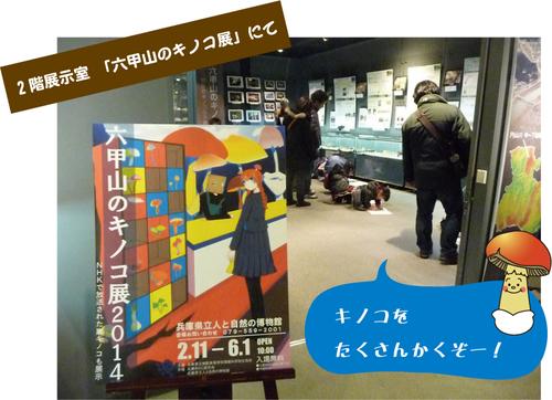 kinoko11.jpg
