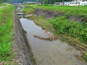 wakaigawa2013.jpg