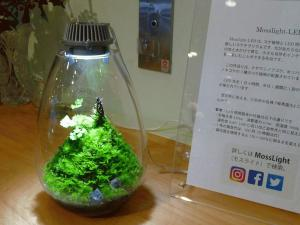 s-MossLight-LED  hitohaku1 (4).jpg