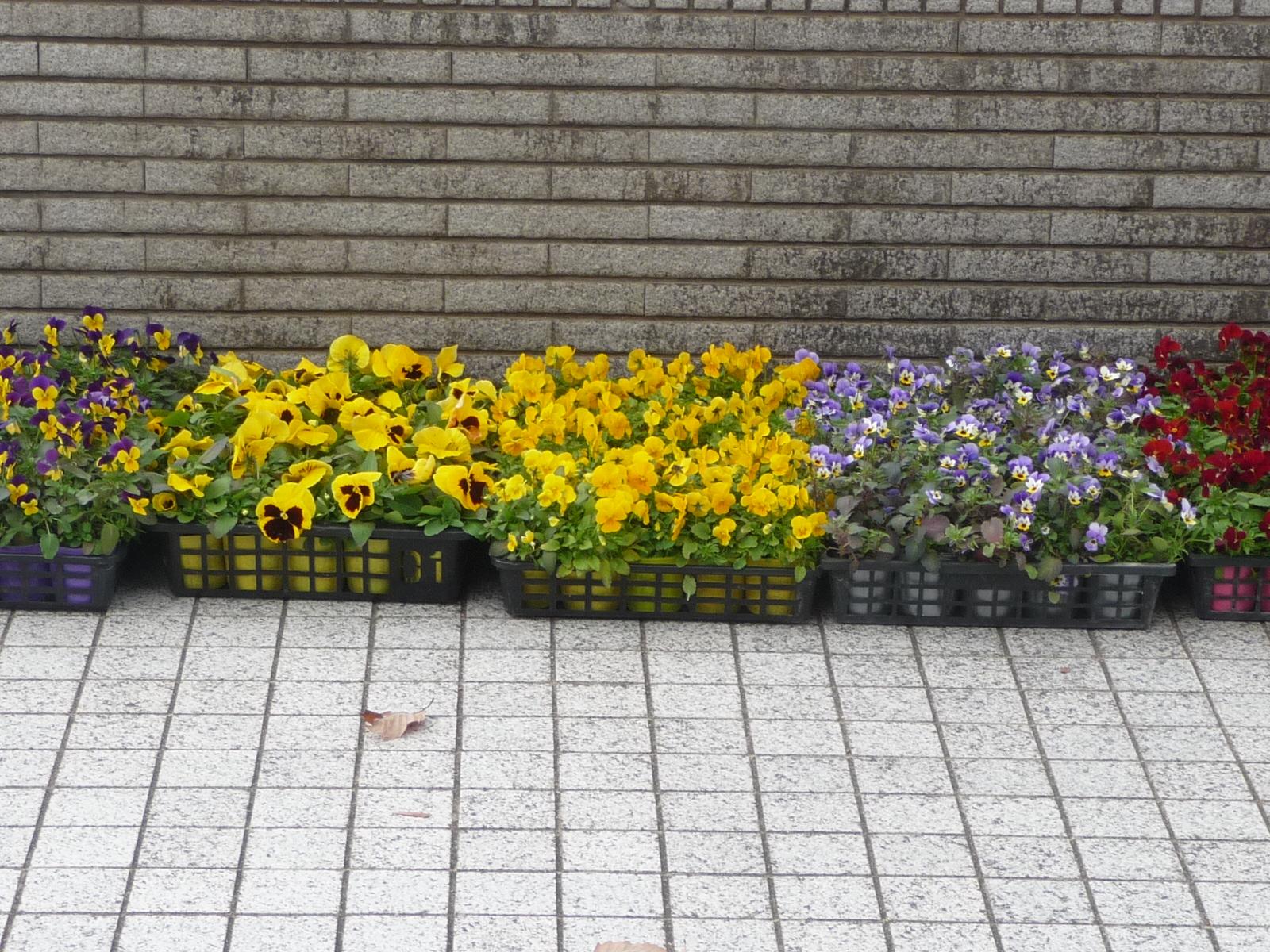 http://www.hitohaku.jp/blog/folder241/P1040736.JPG
