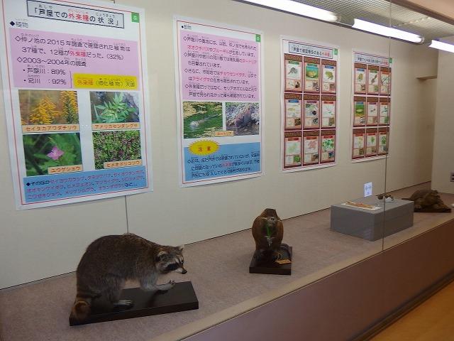 http://www.hitohaku.jp/blog/folder241/ashiya_gairai4.jpg