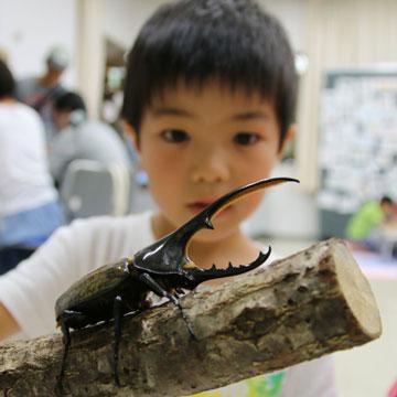 http://www.hitohaku.jp/blog/mushi_9236.jpg